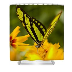 Malachite Butterfly On Flower Shower Curtain by Craig Tuttle