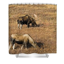 Male And Female Moose Alces Alces In Shower Curtain by Philippe Widling