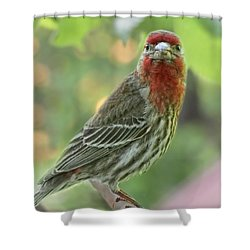 Shower Curtain featuring the photograph Male House Finch by Debbie Portwood