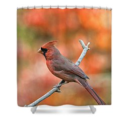 Male Northern Cardinal - D007810 Shower Curtain by Daniel Dempster