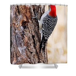 Male Red-bellied Woodpecker 2 Shower Curtain by Larry Ricker