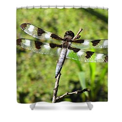 Shower Curtain featuring the photograph Male Twelve-spotted Dragonfly by Maciek Froncisz