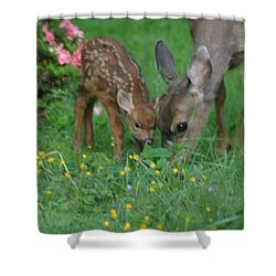 Shower Curtain featuring the photograph Mama And Spotted Baby Fawn by Kym Backland