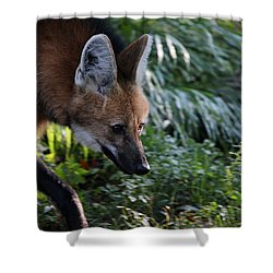 Maned Wolf Shower Curtain by Karol Livote