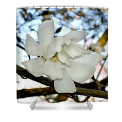 Shower Curtain featuring the photograph Mangolia  by Katy Mei