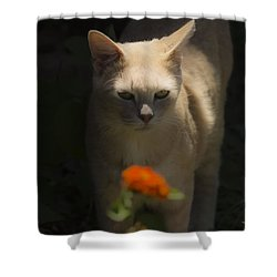 Many Moods Of Kitty Shower Curtain by Kim Henderson