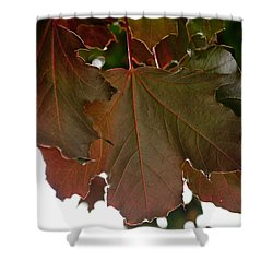 Shower Curtain featuring the photograph Maple 2 by Tikvah's Hope