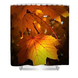 Maple At First Light Shower Curtain