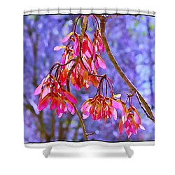 Shower Curtain featuring the photograph Maple Keys by Judi Bagwell