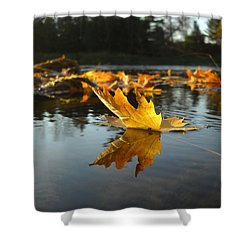 Maple Leaf Floating In River Shower Curtain