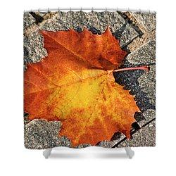 Maple Leaf In Fall Shower Curtain by Carolyn Marshall