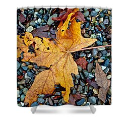 Shower Curtain featuring the photograph Maple Leaf On The Rocks by Tikvah's Hope