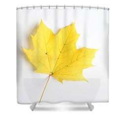 Maple Leaf Shower Curtain by Photo Researchers