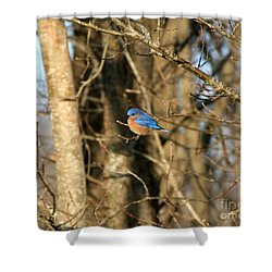 March Bluebird Shower Curtain by Neal Eslinger