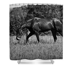 Shower Curtain featuring the photograph Mare In Field by Davandra Cribbie
