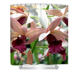 Shower Curtain featuring the photograph Maroon Bloom by Debbie Hart