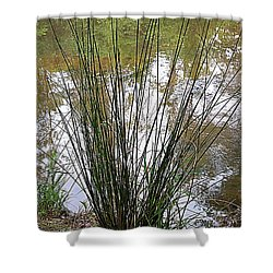 Shower Curtain featuring the photograph Marsh Grass by Renee Trenholm