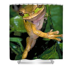 Masked Treefrog Shower Curtain by Gregory G. Dimijian