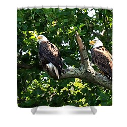 Shower Curtain featuring the photograph Mating Pair by Randall Branham