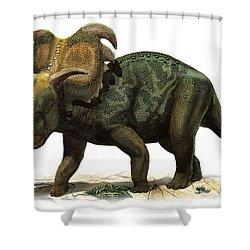 Medusaceratops Lokii, A Prehistoric Era Shower Curtain by Sergey Krasovskiy