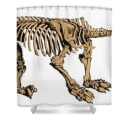 Megatherium, Extinct Ground Sloth Shower Curtain by Science Source