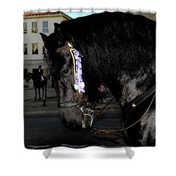 Shower Curtain featuring the photograph Menorca Horse 2 by Pedro Cardona