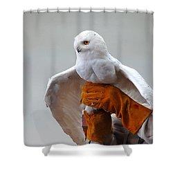 Message Snowy Owl Shower Curtain by LeeAnn McLaneGoetz McLaneGoetzStudioLLCcom