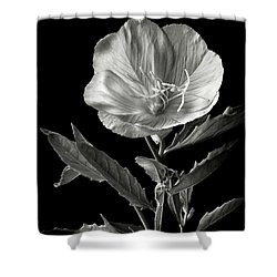 Shower Curtain featuring the photograph Mexican Evening Primrose In Black And White by Endre Balogh