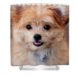 Shower Curtain featuring the photograph Mi-ki Puppy by Angie Tirado