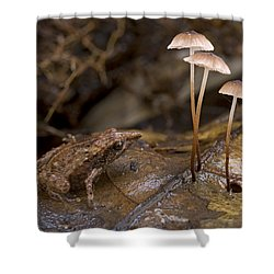 Microhylid Frog Papua New Guinea Shower Curtain by Piotr Naskrecki