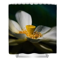 Shower Curtain featuring the photograph Midnight Blur by Travis Burgess