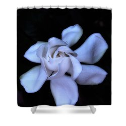 Midnight Gardenia Shower Curtain by Judi Bagwell