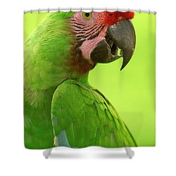 Military Macaw Ara Militaris Portrait Shower Curtain by Pete Oxford