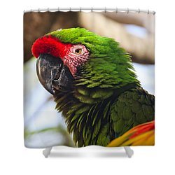 Military Macaw Parrot Shower Curtain by Adam Romanowicz