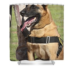Military Working Dog Pants In The Hot Shower Curtain by Stocktrek Images