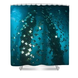 Milkfish, Dumaguete Pier, Philippines Shower Curtain by Stuart Westmorland