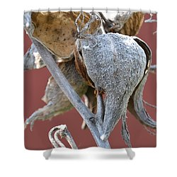 Milkweed Shower Curtain by Randy J Heath
