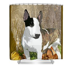 Minature Bull Terrier Shower Curtain by One Rude Dawg Orcutt