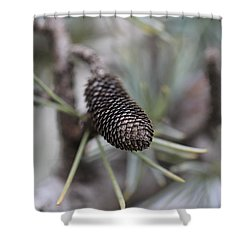 Miniature Pine Cone  Shower Curtain by Douglas Barnard