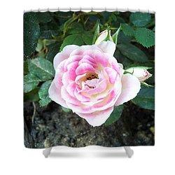 Miniature Rose Shower Curtain