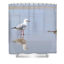 Mirrored Seagull Shower Curtain by Kaye Menner