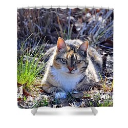 Miss Kitty Shower Curtain by Al Powell Photography USA