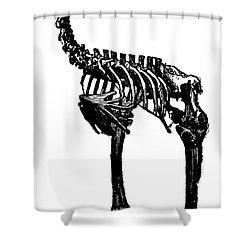 Moa Skeleton Shower Curtain by Granger
