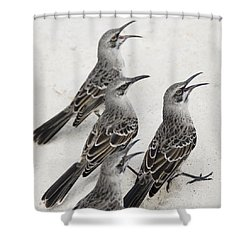 Mockingbirds Mimidae Galapagos, Equador Shower Curtain by Keith Levit