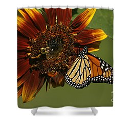 Monarch And The Bee Shower Curtain