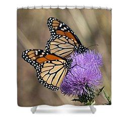 Monarch Butterflies On Field Thistle Din162 Shower Curtain by Gerry Gantt