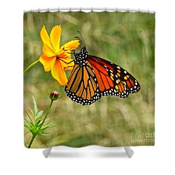 Monarch Butterfly And Yellow Cosmos Shower Curtain by Byron Varvarigos