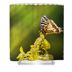 Monarch Butterfly Shower Curtain by Carlos Caetano