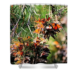 Monarch Butterfly Gathering Shower Curtain by Tap On Photo