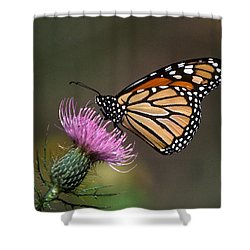 Monarch Butterfly On Thistle 13a Shower Curtain by Gerry Gantt